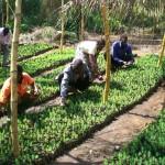 Kolpingplantage